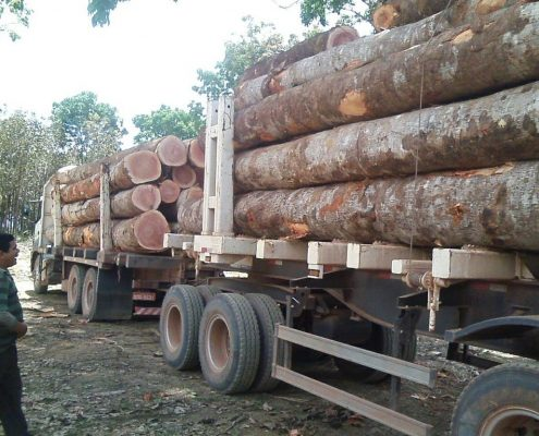 toras de madeira de mogno africano cortado no Brasil