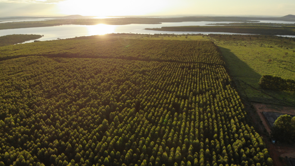 vista aérea da floresta de mogno africano do Viveiro Origem, com o sol se pondo ao fundo. A floresta é certificada, descubra mais sobre a certificação florestal no nosso blog!