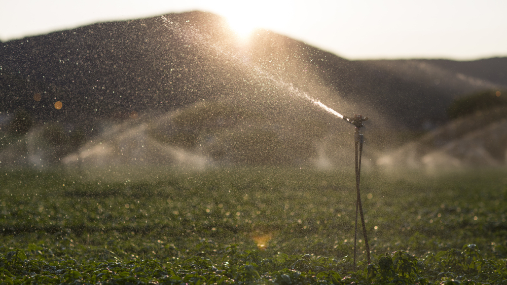 Sistema de microaspersão, no qual uma haste sustenta um dispositivo que libera água em pequenas gotículas sobre uma plantação rasteira, com o sol ao fundo, se pondo atrás da montanha.